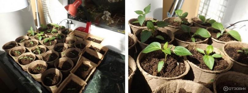 Фитолампа для растений в Leroy Merlin